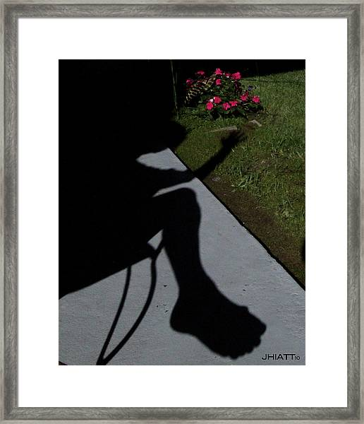 Shady Bunion  Framed Print