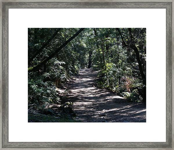 Shady Road On Mt Tamalpais Framed Print
