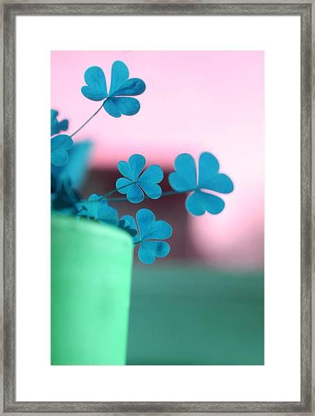 Shamrock Pot V Framed Print