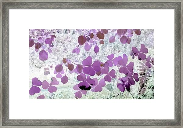 shamrocks #2A Framed Print