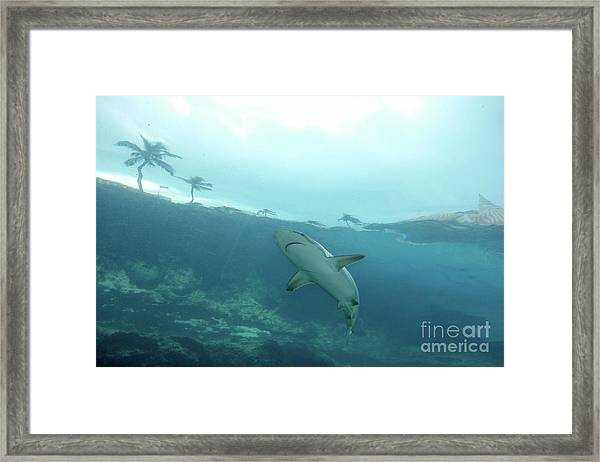 Shark Attack Framed Print