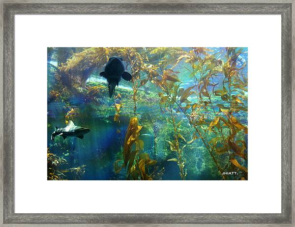 Shark Bait Framed Print