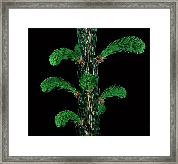 Sharp And Soft Framed Print