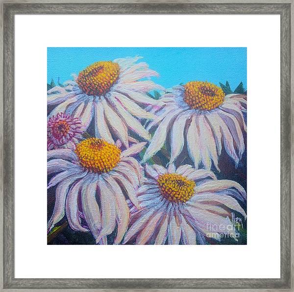 Shasta Daisy#1 Framed Print