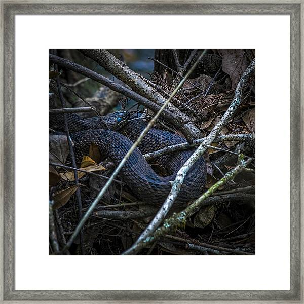 Shedding Time Framed Print