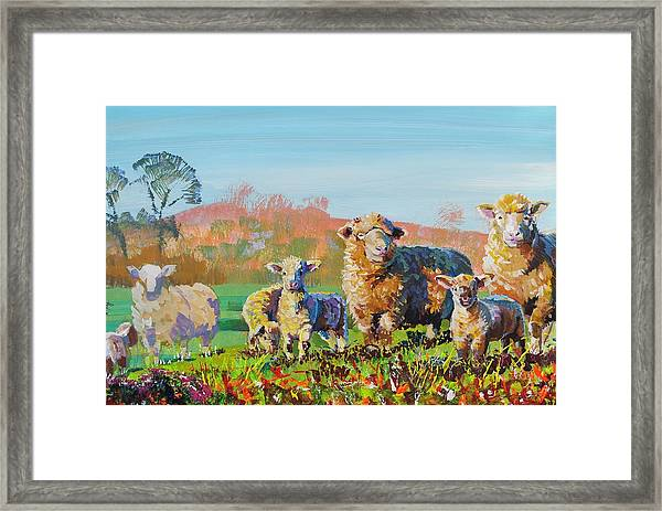 Sheep And Lambs In Devon Landscape Bright Colors Framed Print