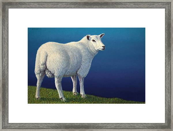 Sheep At The Edge Framed Print