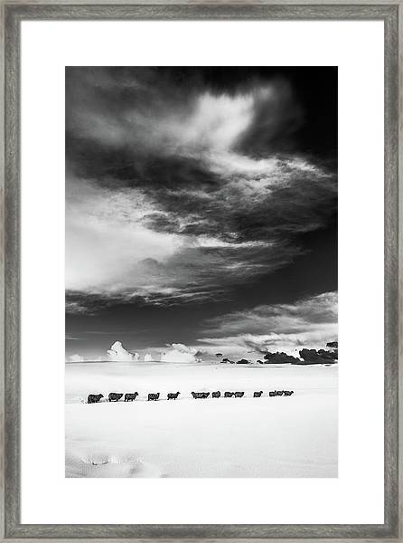 Sheep In Snow, Alnmouth, Northumberland Framed Print
