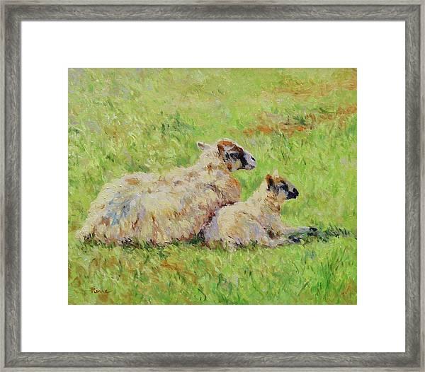 Sheep In The Spring Time,la Vie Est Belle Framed Print