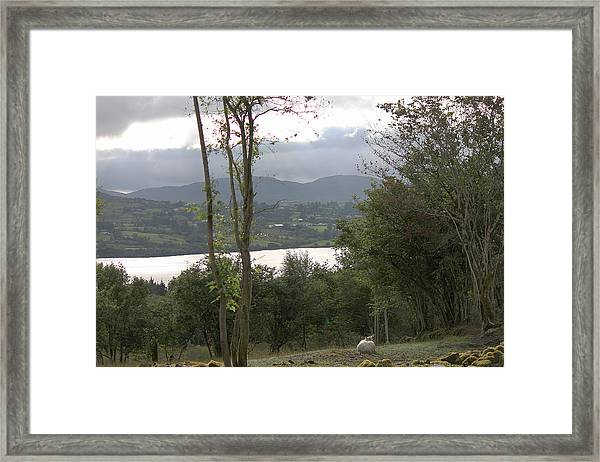 Sheep Near Lough Eske Framed Print