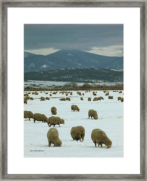 Sheep On Winter Field Framed Print