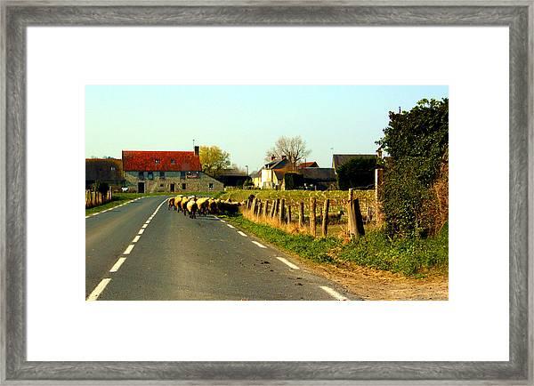 Sheep Right Of Way Framed Print