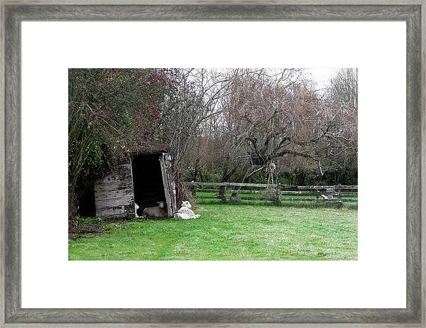 Framed Print featuring the photograph Sheep Shed by Lorraine Devon Wilke