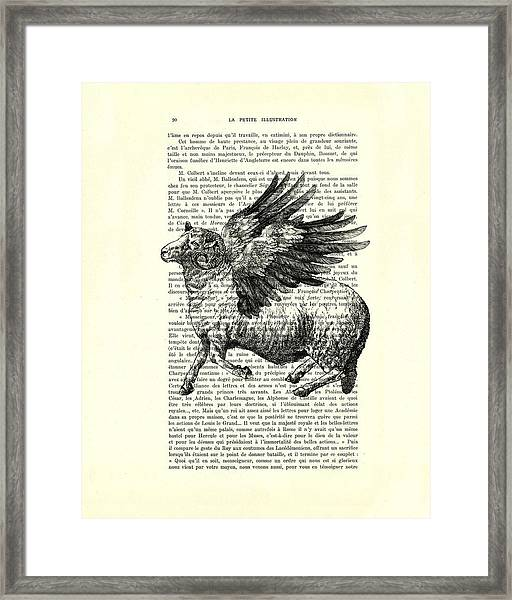 Sheep With Angel Wings Black And White  Framed Print