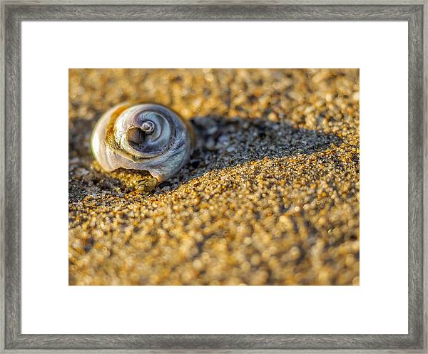 Shell Framed Print by Steve Spiliotopoulos