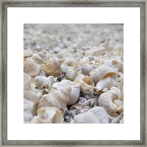 Shells 1 Framed Print