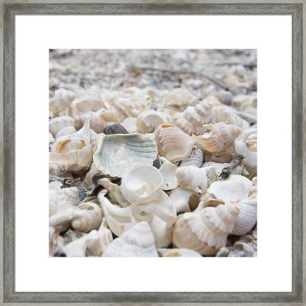 Shells 2 Framed Print