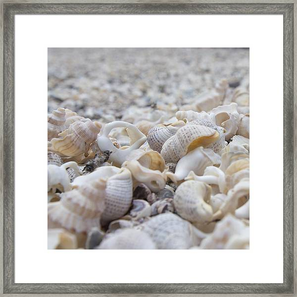 Shells 3 Framed Print
