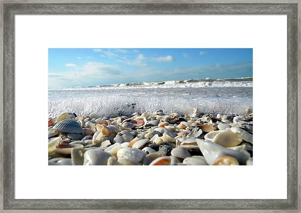 Shells On The Beach Framed Print