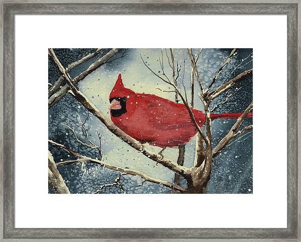 Shelly's Cardinal Framed Print