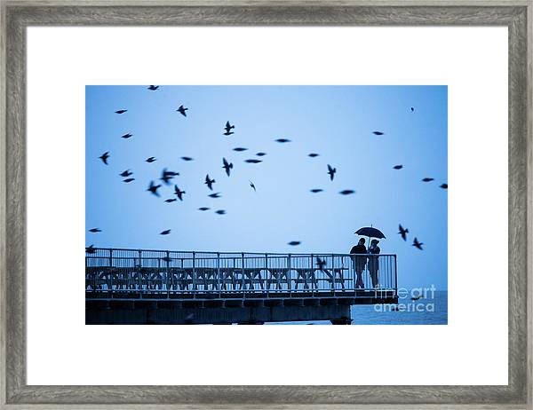 Sheltering Under An Umbrella Watching The Birds Framed Print