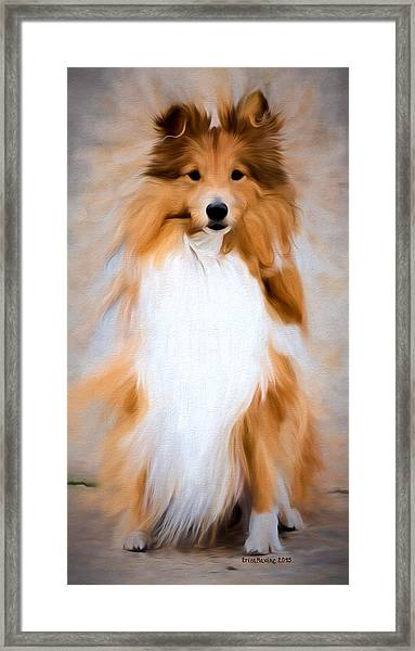 Shetland Sheepdog - Sheltie Framed Print