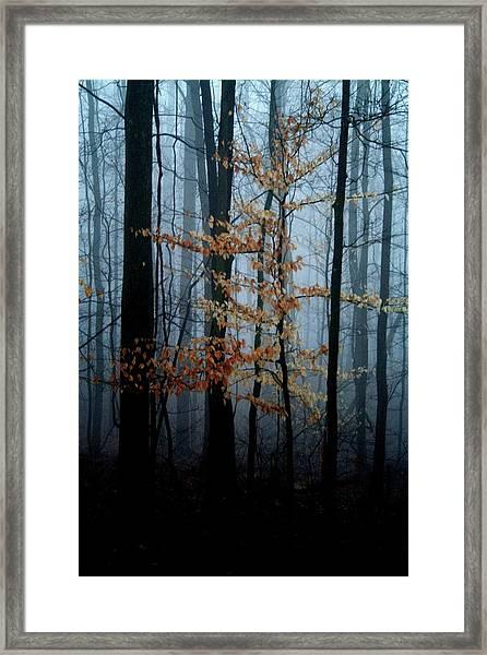 Shiver Framed Print