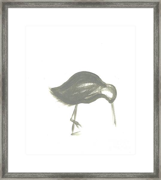 Shore Bird Framed Print
