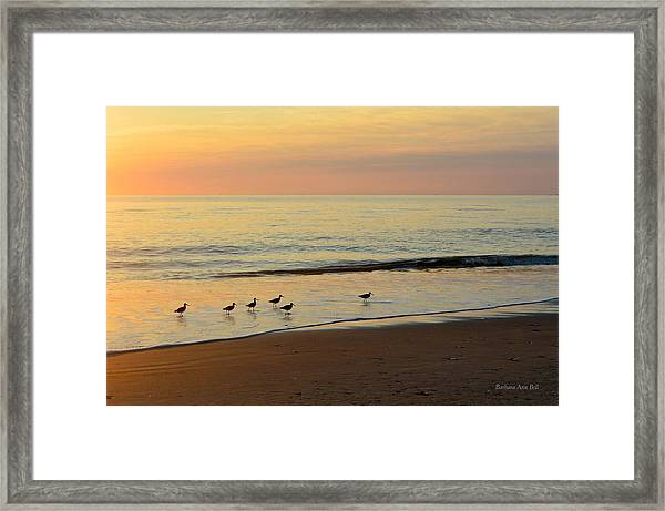 Shorebirds 9/4/17 Framed Print