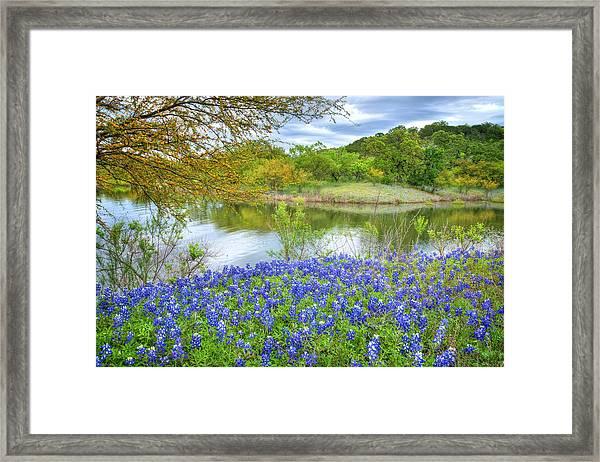 Shoreline Bluebonnets At Lake Travis Framed Print