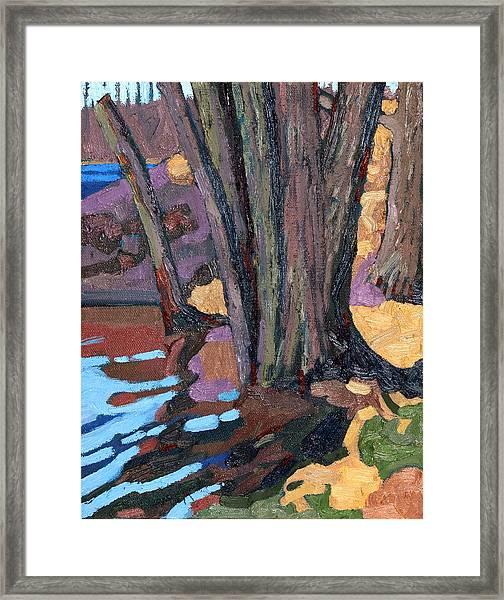 Shoreline Maples Framed Print