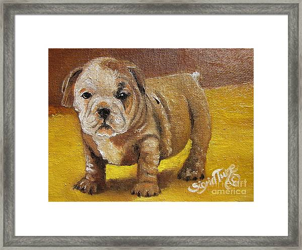Chloe The   Flying Lamb Productions      Shortstop The English Bulldog Pup Framed Print