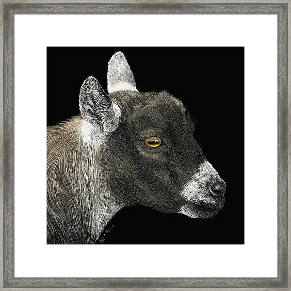 Show Goat Framed Print