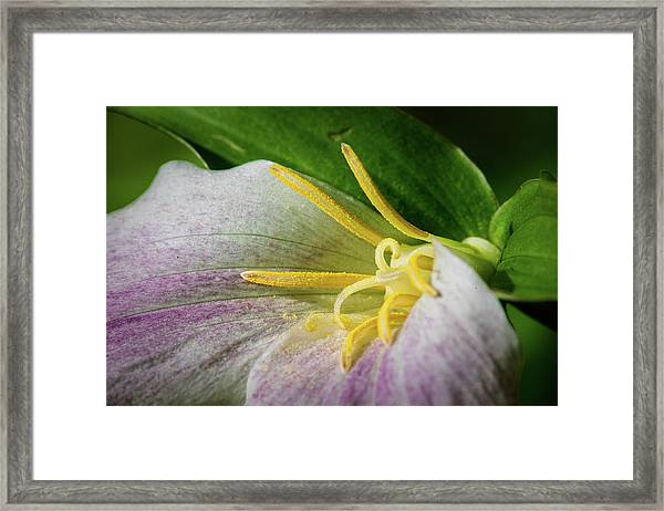 Showing Its Age Framed Print