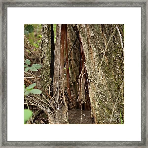 Shredded Tree Framed Print