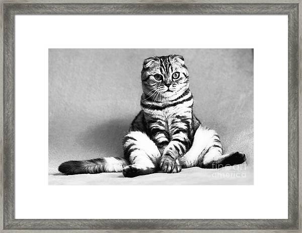 Shy Cat Framed Print