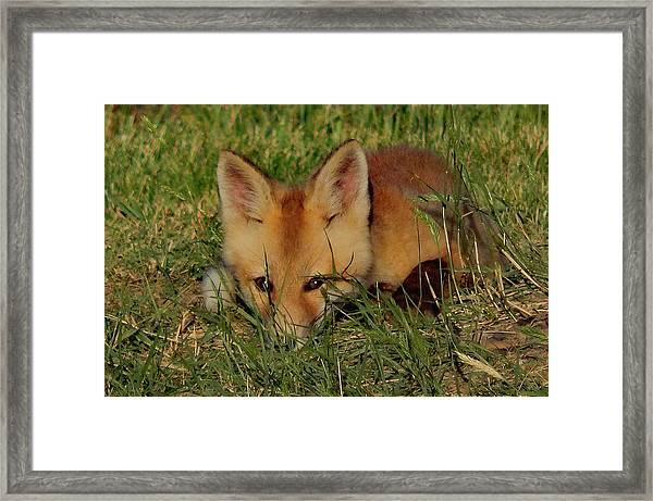 Shy One Framed Print