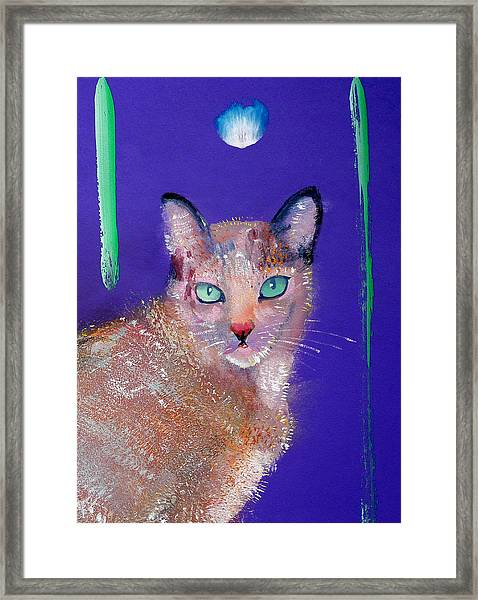 Siamese Cat Framed Print