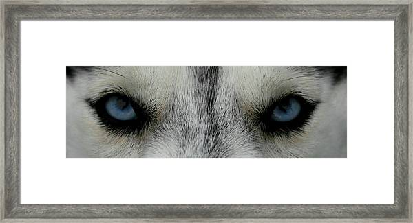 Siberian Eyes Framed Print