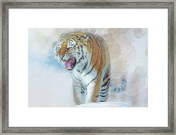 Siberian Tiger In Snow Framed Print