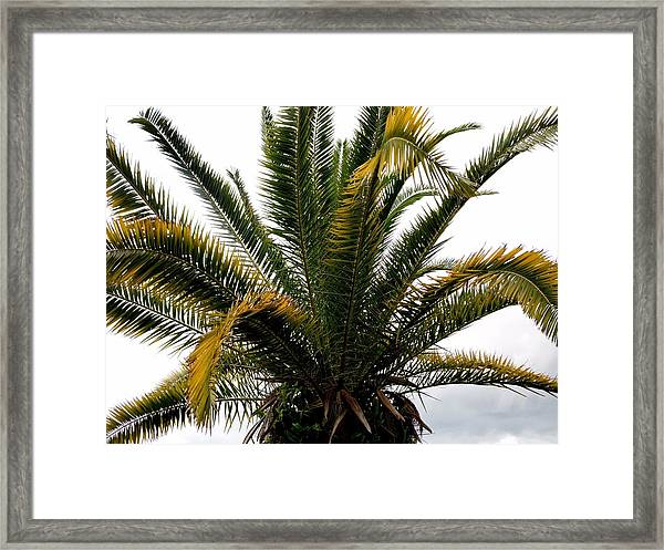 Sideshow Palm Framed Print