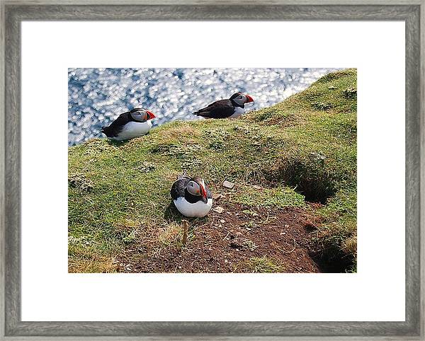 Framed Print featuring the photograph Siesta by HweeYen Ong