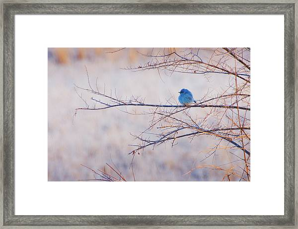 Framed Print featuring the photograph Signs Of Spring by John De Bord