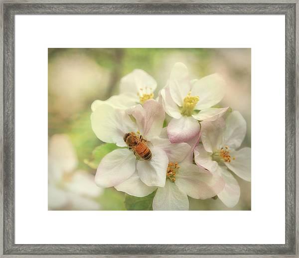 Signs Of Spring Framed Print