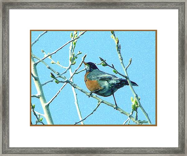 Signs Of Spring Framed Print by Vallee Johnson