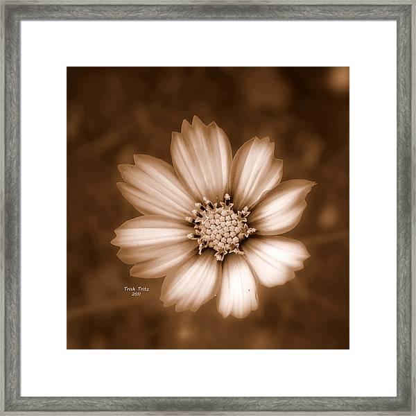 Silent Petals Framed Print