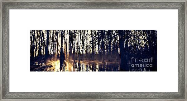 Silent Woods No 4 Framed Print