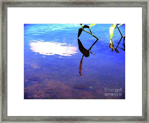 Silhouette Aquatic Fish Framed Print