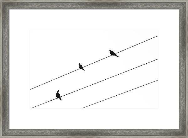 Silhouette Of Birds Sitting On Electric Cables Framed Print