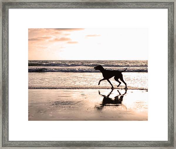 Silhouette Of Dog On Beach At Sunset Framed Print